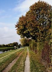 octember variations II (MH *) Tags: elz emmendingen weg herbst bltter bume gras autumn fall leaves grass tree way fluss d7200 sigma30mmart