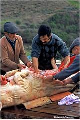 Portugal - Algarve, abattage traditionnel du cochon (gerard21081948) Tags: portugal serra algarve cochon porc abattage tradition extérieur personnes