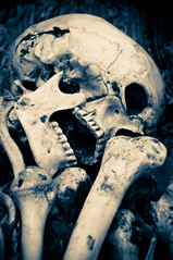 Skeleton (rhelfant1) Tags: abstract anatomy black blue bone bones britishmuseum concept creativity danger dangerous dark dead deadly death dirty doom goth gothic grunge halloween haunting human nightmare piracy rock sign skeleton skull tooth