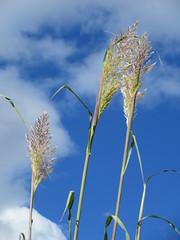 20,000th image on Flickr! (jamica1) Tags: grass ornamental sky cloud rutland kelowna okanagan bc british columbia canada