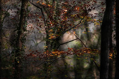 Forest (Isabelle Aurore) Tags: forest fort arbres trees automn automne feuilles bretagne stangala