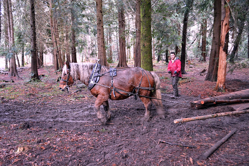 horse logging in Teign Valley