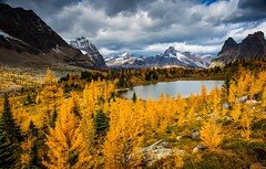 Opabin Plateau Colors (jfusion61) Tags: canada canadian rockies british columbia yoho national park opabin plateau larch trees fall autumn mountains landscape clouds nikon d810 24mm f18 leegraduatedfilter trail
