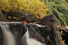 Over the rockx (aerojad) Tags: chicago chicagobotanicgarden fall autumn fallcolors colorful flora leaves leaf waterfall longexposure daytimelongexposure stream water landscape outdoors