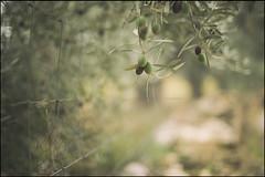 desnuda en la tarde verde (jotaaguilera) Tags: nikon d610 nikkor 50mmf14g bokeh green verde dof aceituna olive luz light fence hff