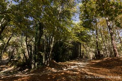 forest glade (stavros karamanis) Tags: forest grade woods trees colours autumn leaves road roadtrip landscapephotography landscape canonphotography canonusers canon t3i tokina 1116mm f28 dxii polarize hoyafilters outdoor paphos cyprus