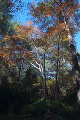 Troodos Geopark (25) (Polis Poliviou) Tags: polispoliviou polis poliviou   cyprus cyprustheallyearroundisland cyprusinyourheart yearroundisland zypern republicofcyprus  cipro  chypre   chipir chipre  kipras ciprus cypr  cypern kypr  sayprus kypros polispoliviou2016 troodosgeopark troodos mediterranean nicosia valley life nature forest historical park trekking hiking winter walking pine pines prodromos limassol paphos fall autumn geopark kakopetria