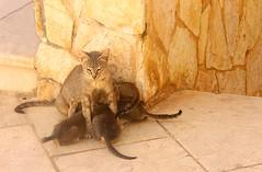 Cats Family (Manuela Ceretti) Tags: gatti gatto cats animali animals natura nature