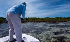 _R110185 (mediumdun) Tags: bonefishing flyfishing andros