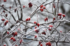 cold.outside (hoffi99) Tags: fog gray grey hoffi99 ice red winter