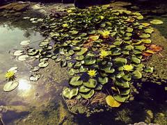 Koningspark Oostende. (ost_jean) Tags: koningspark oostende iphone6s nature flowers bloemen fleurs ostjean