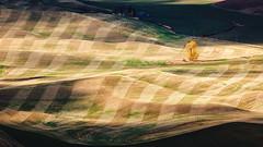 Seduction (John Westrock) Tags: landscape steptoebutte farmfield rollinghills pacificnorthwest washington checkerboard canoneos5dmarkiii canonef100400mmf4556lisusm garfield unitedstates us