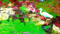 In the colors of petals on water (Bamboo Barnes - Artist.Com) Tags: photo painting water bird river pond reflection vivid green red pink blue white digitalart japan bamboobarnes