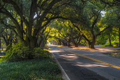 South Boundary, 2016 (APGougePhotography) Tags: aiken tree trees liveoaks liveoak southcarolina south sc carolina nik nikcollection colorefexpro topaz topazlabs denoise topazdenoise detail topazdetail nikon nikond800 d800