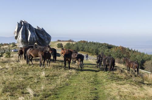 Horses, 11.10.2014.