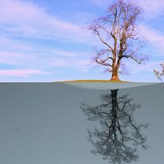 Heaven and Hell (Aakash_skyiris) Tags: heaven hell blackandwhite tree nature collage switzerland winter summer