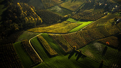 On hills. (rinogas) Tags: italy piemonte langhe alba serralungadalba wine hills autumn rinogas unesco