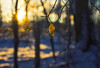 Hanging On (Matt Champlin) Tags: day short solistice morning life sunrise leaf hold holdingon nature woods woodland peace peaceful landscape quiet calm calming tranquil canon 2016