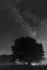 27. Juni - Im Zeichen der Sterne