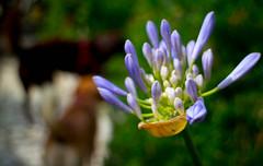 Fiori <3 (XXAquarius) Tags: flowers rose natura campagna fiori giardino ortensie margherite