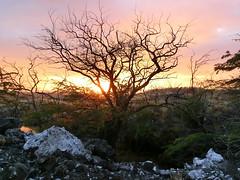 Big Island 292 (Ted Tamada) Tags: hawaii casio pointandshoot bigisland casioexilim exilim bigislandhawaii hawaiianlandscape tedtamada tedtamadaphotography