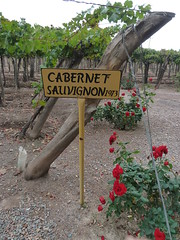 Cabernet Sauvignon 1973