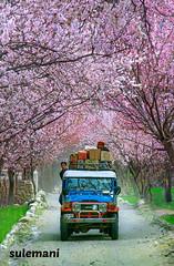 SKARDU IN SPRING , PAKISTAN (TARIQ HAMEED SULEMANI) Tags: travel tourism trekking spring nikon sensational tariq skardu supershot theunforgettablepictures sulemani tariqhameedsulemani