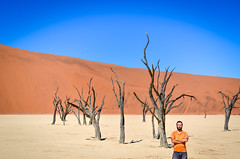 Sharp colors of the salt pan, sand dunes, and dead trees in Dead Vlei, Sossusvlei, Namibia (jbdodane) Tags: africa day622 deadvlei desert dry dunes jb namibnaukluft namibnaukluftpark namibia pan petrified sand sanddunes sesriem sossusvlei tree trunk vlei freewheelycom jbcyclingafrica