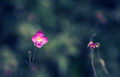 Hmm.. (AnilGoyal Pixelart) Tags: red wild india flower macro green nature colors grass fauna composition canon flora vibrant indian dream scene filter elements frame dreamy floraandfauna vibrance anilgoyalpixelart macrowithatelelens