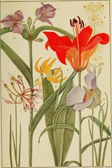 Anglų lietuvių žodynas. Žodis allium canadense reiškia <li>Allium canadense</li> lietuviškai.