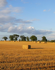 Cantley Fields (mr_snipsnap) Tags: countryside norfolk harvest straw bales cantley