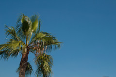 Blue Sky Day... (Reckless Times) Tags: blue vacation sun holiday hot tree sunshine weather spain sunny bluesky palm glorious palmtree condadodealhama