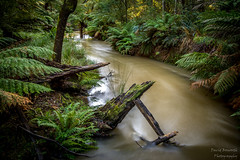Frenchs Road Nature Reserve. (Dave Bosworth Photography) Tags: trees fern green nature water river walking nikon track walk tasmania manfern d7100 davebosworth seabrookcreek frenchsrdreserve