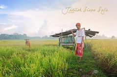 JADILAH SIAPA SAJA (alzikr) Tags: people field cow paddy air malaysia farmer tradition kampung terengganu siapa saja petani jadilah aaziz manir kebur deraman