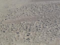 Tulul Abu Fatas? (38RNA640375) (APAAME) Tags: archaeology ancienthistory iraq middleeast airphoto oblique aerialphotography aerialphotograph geocity camera:make=canon exif:make=canon aerialarchaeology geocountry camera:model=canonpowershotg5 geostate exif:model=canonpowershotg5 exif:lens=72288mm exif:aperture=ƒ56 exif:isospeed=50 geo:lon=45678509 geo:lat=31971199 exif:focallength=206875mm tululabufatas pleiades:depicts=912966 geo:location=to31971707419456773539575tululabufatas38rna640375