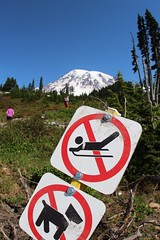 Pets, Sledding busters (daveynin) Tags: blue sky pets mountain snow sign volcano nps clear mountrainier sledding buster sled deaftalent deafoutsidetalent deafoutdoortalent
