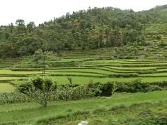 19072014_042927B059 (Didier Tibule) Tags: nepal monsoon kathmandu pokhara ålesund aalesund 2014 dohaairport tibule phulkhark didiertibule