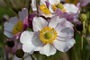 Pretty flowers (AmbitiousJam) Tags: flowers flower nature floral canon bug insect floralappreciation