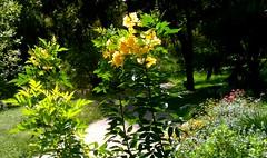 Shoal Creek Trail (malcolmharris64) Tags: flowers austin walking texas trail photostream