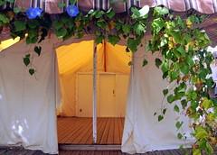 Ocean Grove, NJ (trs125) Tags: jerseyshore tentcity oceangrovenj tenthouses tentcolony