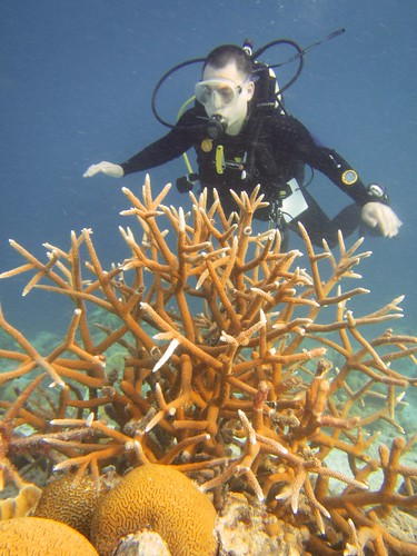 luis + staghorn coral