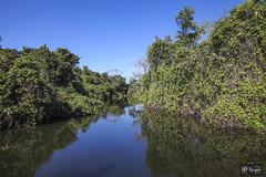 Pantanal (rbpdesigner) Tags: brazil slr southamerica brasil america geotagged américa mt matogrosso pantanal brésil américadosul amériquedusud jobo américadelsur llens südamerika centrooeste ブラジル 南美洲 repúblicafederativadobrasil canonllens pantanalmatogrossense americameridionale lentel canonef1635mmf28liiusm regiãocentrooeste canoneos5dmarkii güneyamerika centrooestedobrasil 5dmkii parquenacionaldopantanalmatogrossense pantanalnorte estadodematogrosso stateofmatogrosso jobogeotagged 060cupinzalestadodematogrossobrasil cupinzal