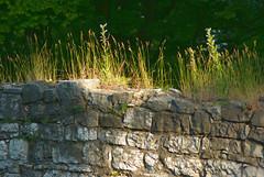 Mur obronny (Hejma (+/- 5400 faves and 1,7 milion views)) Tags: castle grass poland polska zamek trawa lipowiec światłocień fallowland ugór murobronny chairscuro walldefensive