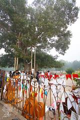 India_0466