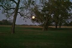 DSC00446 (carrie_20001jf) Tags: supermoon moon morning night astronomy texas sky texassky supermoon2016 2016 skyporn nature texasnature