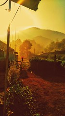 Morning shot (abhishekskumar) Tags: munnar kerala india coolshots nature vibe sunshine sunrise