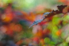 DSC_0007 (criscrot) Tags: parcsaintemarie nancy lorraine bokeh colors d200 50mm18 automne autumn couleurs