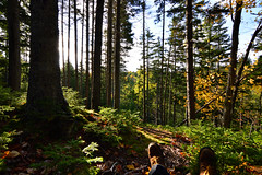 My New Favorite Hang Out Spot (TheNovaScotian1991) Tags: victoriapark truro colchestercounty canada nikond3200 forest woods hemlocktree autumn fallcolors fallenleaves sunlight morninglight tokina1116mmdxii ultrawideangle hikingboots feet shadow maritimes