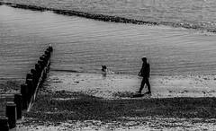 Walking the dog (MiguelHax) Tags: dovercourt beach groyne dog sea bw wb blackandwhite whiteandblack monochrome