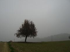unboxing the tree (UnbewegtImBilde) Tags: baum